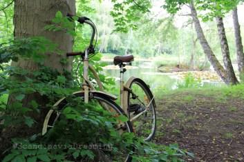 Un vélo perdu dans les bois