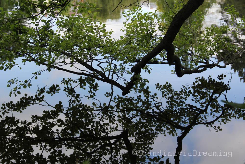 Branche se reflétant dans l'eau