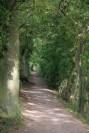 Chemin sous-bois