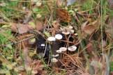 Champignons blancs