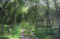 à l'entrée de la forêt