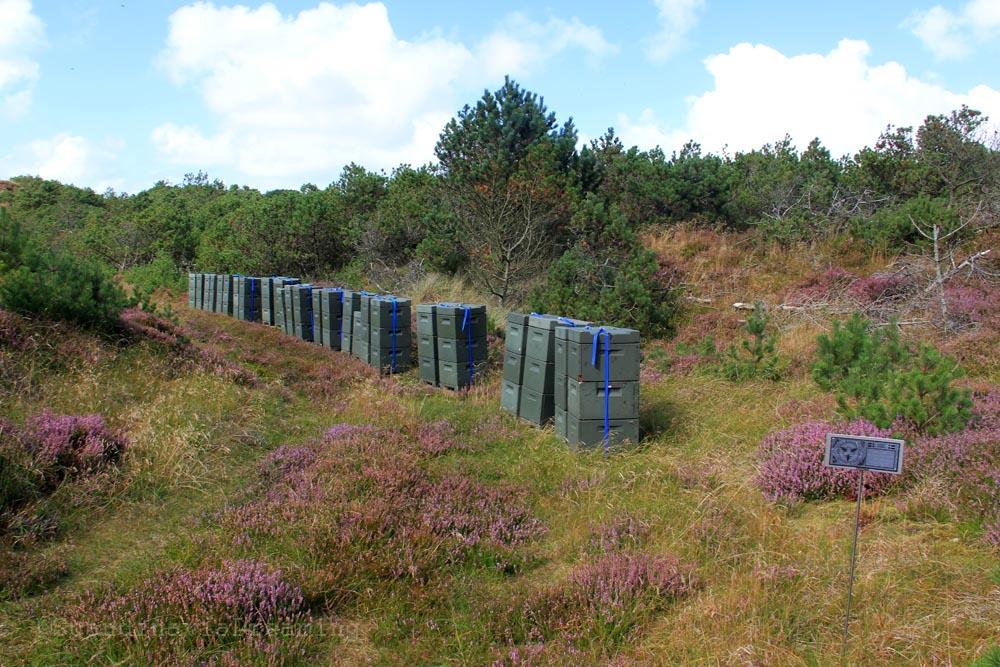 ruches bruyère danemark