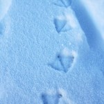 palmes dans la neige