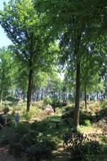 Buissons à perte de vue