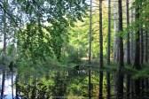 Forêt Danemark
