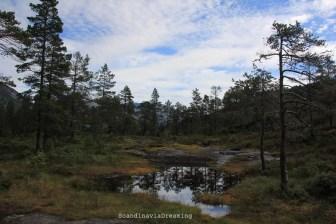 Balade en forêt norvégienne