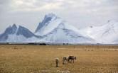 rennes islandais