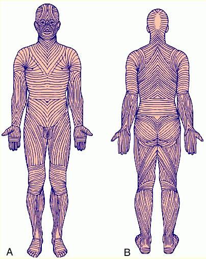 langers lines and rstl show how to model a human realistically