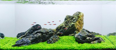 Aquascape Analysis of George Farmer's One-Pot Iwagumi ...