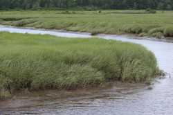 Dunstan River