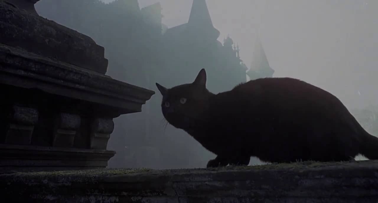 The Legend Of Hell House Cat