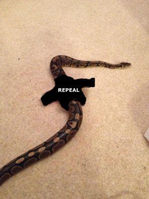 Snake Zappone 2