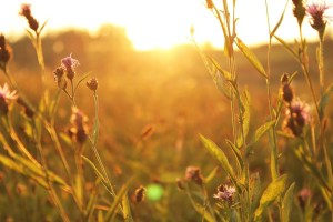 sunlight in a field picture