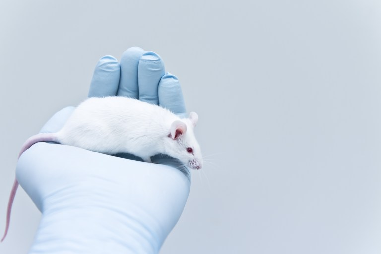 A laboratory mouse sitting on a researcher's hand.