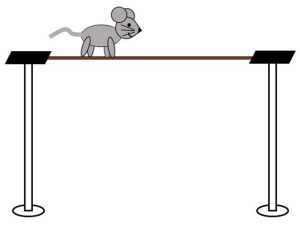 Mouse cossing a balance beam connecting two platforms