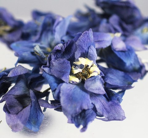 Ceremony Flower Petals   Beautiful Roses and Delphiniums     Ceremony Flower petals delphinium