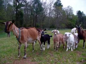 Four-legged farm friends
