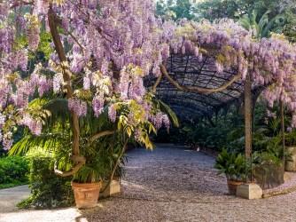 Jardín Botánico. Málaga