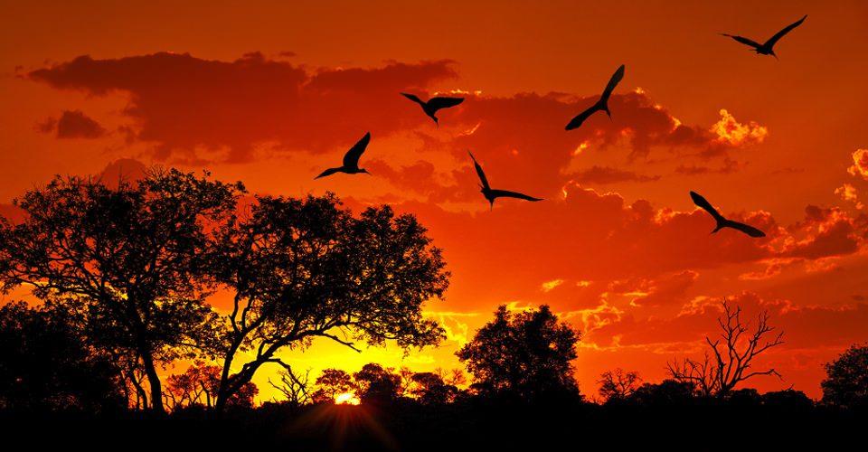 Kenya-Migration-Photo-10-sunset