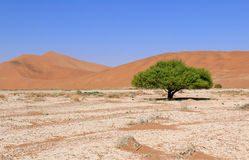 albero prospero