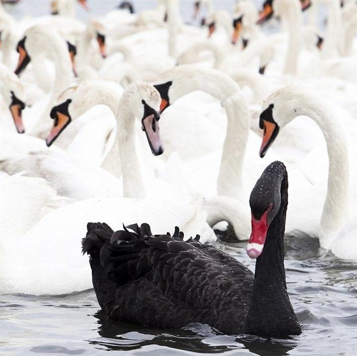 IL BLACK SWAN SECONDO SOC GEN
