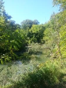Betty Sutherland Trail (13)