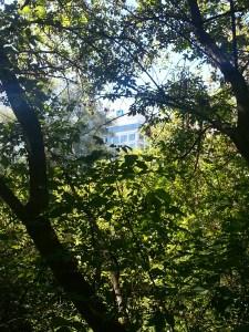 Betty Sutherland Trail (23)