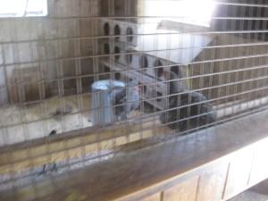 6. Riverdale Farm turkey