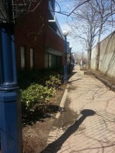 5. Sherlock Holmes Walk Toronto Reference Library