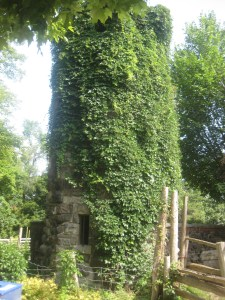 17. Riverdale Farm Donnybrook ruins