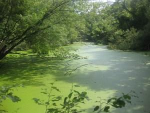 20. Rivedale Farm pond