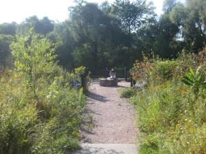 Charles Sauriol Conservation Area (9)
