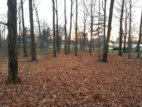 Wishing Well Woods