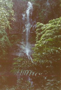 Rain forest at Twin Falls on Maui