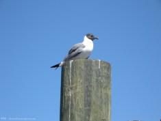 Hear the sounds of shorebirds