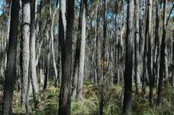 Forest near Mallacoota 3