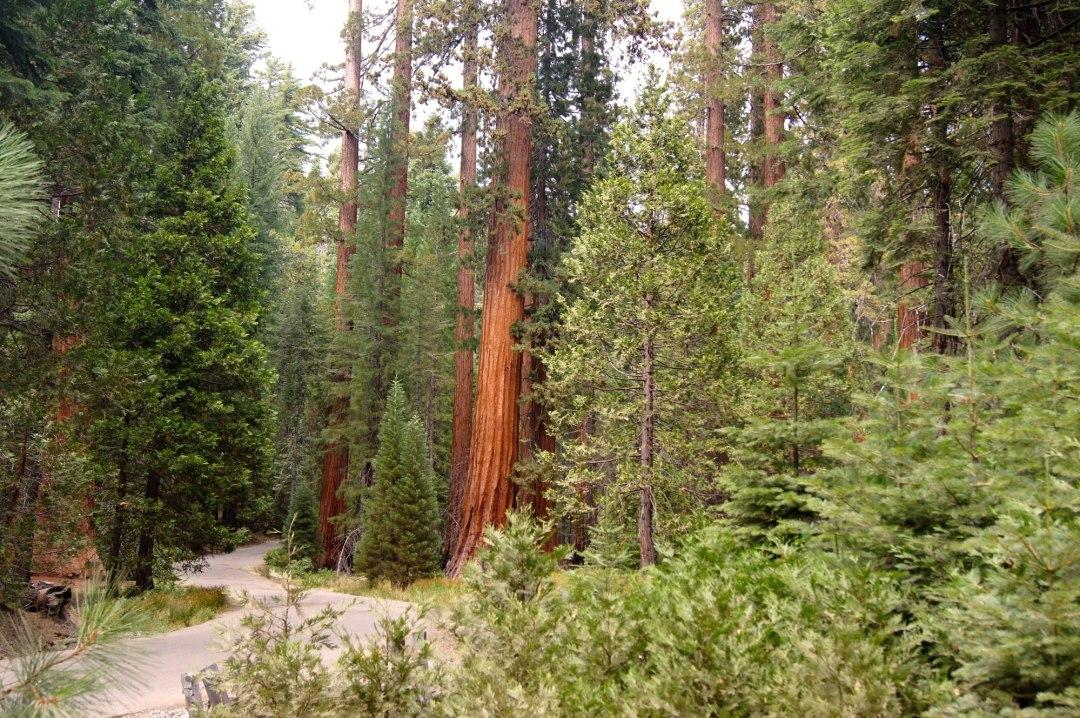 Redwoods elopement location