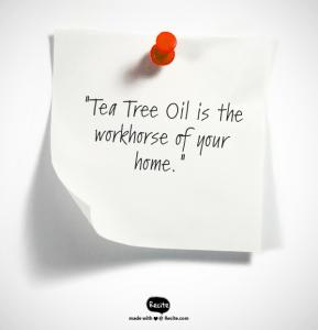 Tea Tree, tea tree uses, tea tree oil acne, tea tree oil dandruff, melaleuca oil, yeast infection home remedy