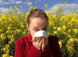 Bless You! Sinus Congestion, nasal congestion, sinusitis, stuffy nose, home remedies for sinus congestion