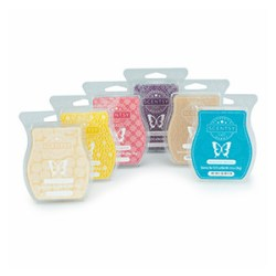 6 pack scentsy wax bars