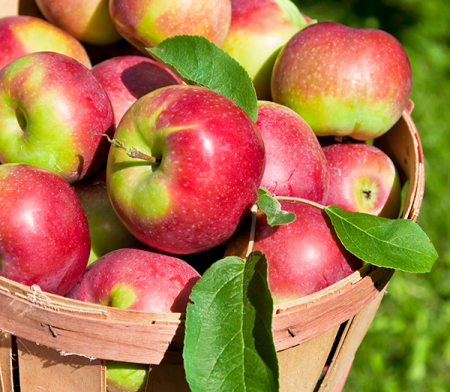 featured-diy-apples