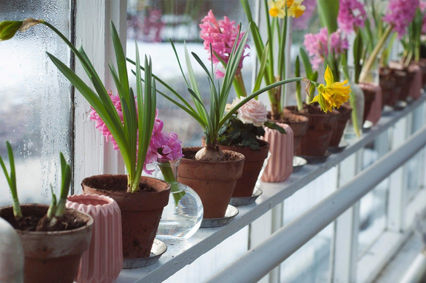 photo of greenhouse of potted spring flowers