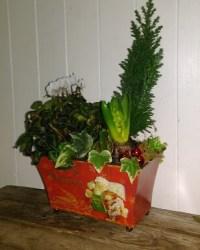 Festive Planted Arrangement