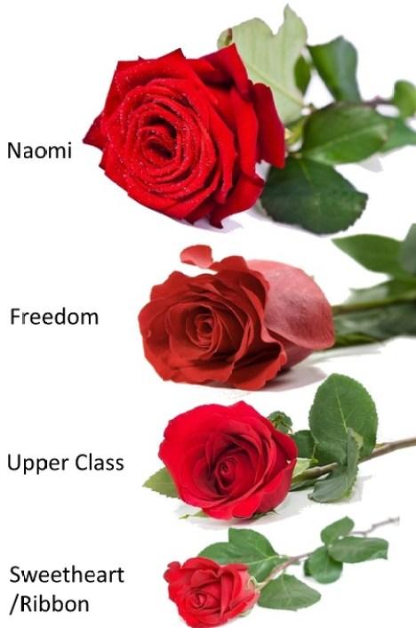 compare roses