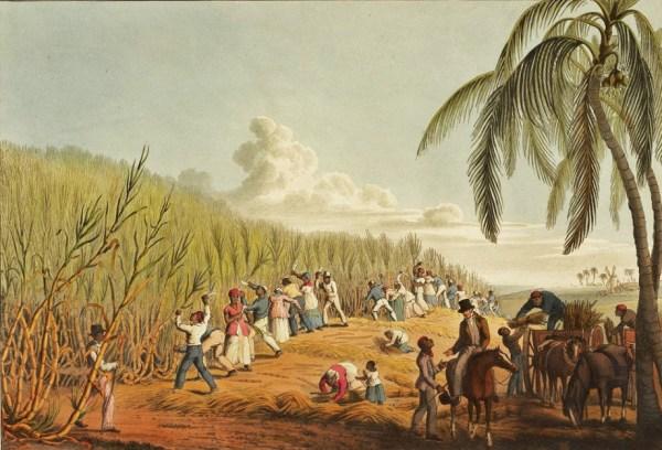 A colour print showing long line black slaves working on sugar plantation