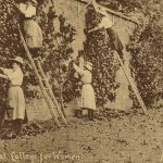 Erased from history: women gardeners