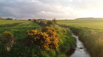 Brexit, farmland values and subsidies: who wins?