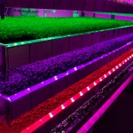 Scotland's first vertical farm grows hope for the future