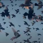 Screenshot, from Max Richter's Mercy, official music video by Yulia Mahr