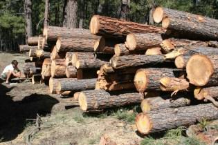 Log Pile SM